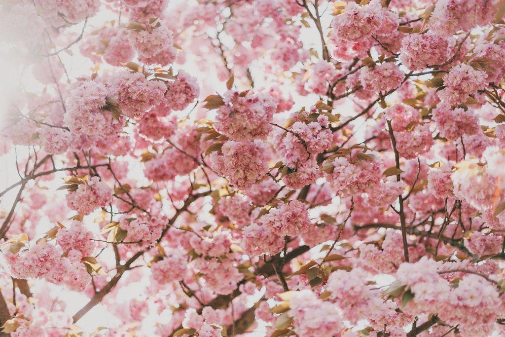 お花見にオススメ♪写真に映えるメイクで誰よりも可愛く♡のサムネイル