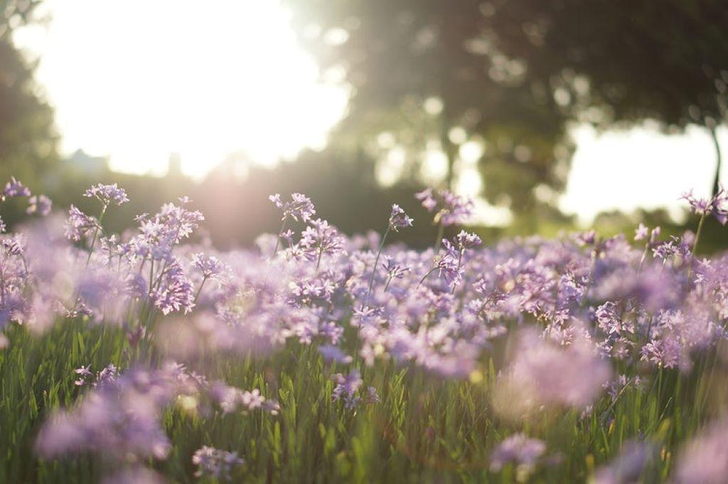 透明感と春っぽさ、いいとこどりできちゃうラベンダーコスメ集めました♡のサムネイル