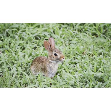 誰が見ても可愛いウサギ顔に♡オススメの赤系シャドウ教えます!