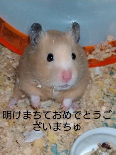 💞[NATHUMI]∞ on LIPS 「新年明けましておめでとうございます!今年はネズミ年ですね!とい..」(1枚目)