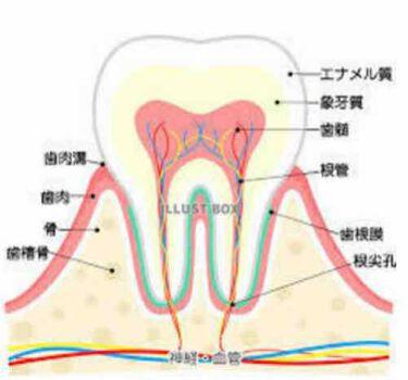 歯科用 DENT Check-up standard/ライオン/歯磨き粉を使ったクチコミ(2枚目)