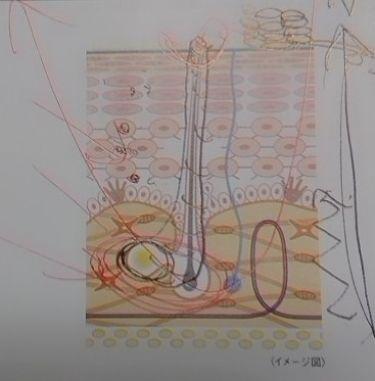 フレッシュ クリア サクラ クレンジング オイル/shu uemura/オイルクレンジングを使ったクチコミ(2枚目)