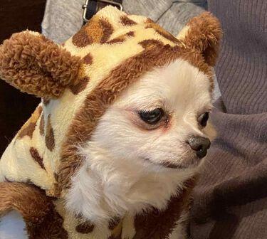 【画像付きクチコミ】Happyハロウィン👻🎃🕸✝️🕷こんばんは✩.*˚🍬🎃✞👻trickortreat👻✞🎃🍬風邪を引いてしまい。。数日寝込みましたが、今日はハロウィンだからやっぱり投稿します❤笑美的買いました!!#笹かまちゃん買い❤絶対おすすめ!買うべ...