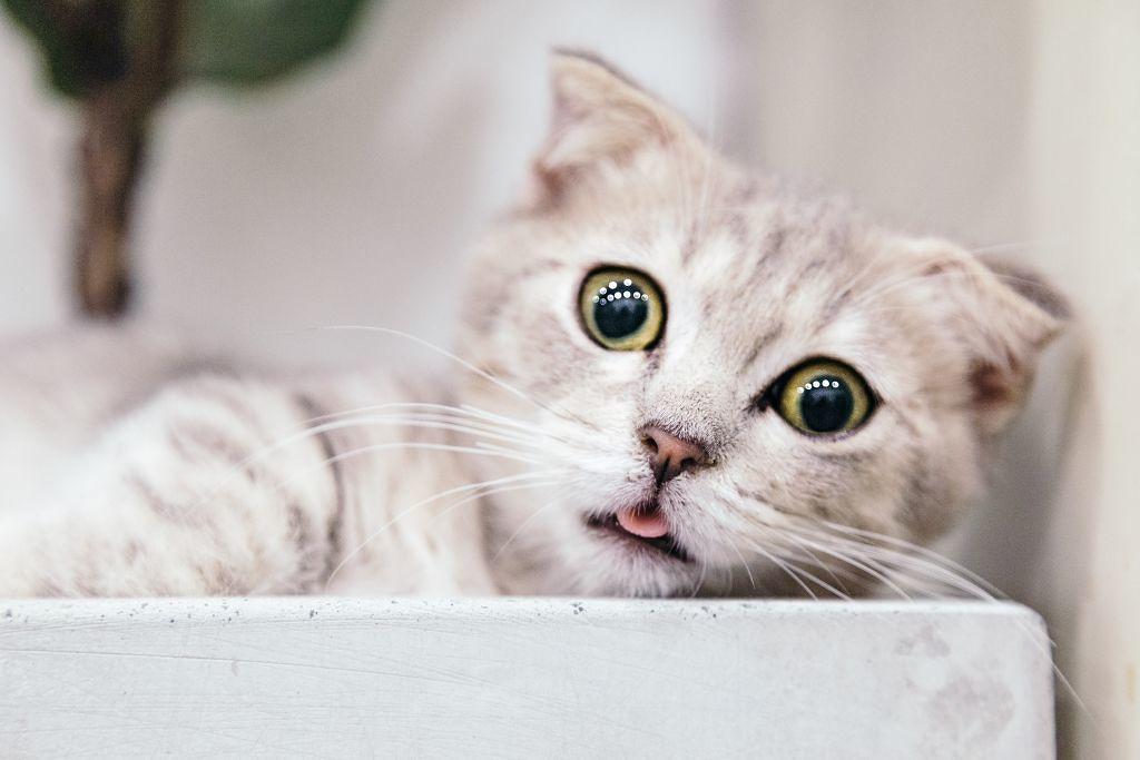 猫目メイクのやり方&おすすめコスメ18選《一重・奥二重・垂れ目・二重別》のサムネイル