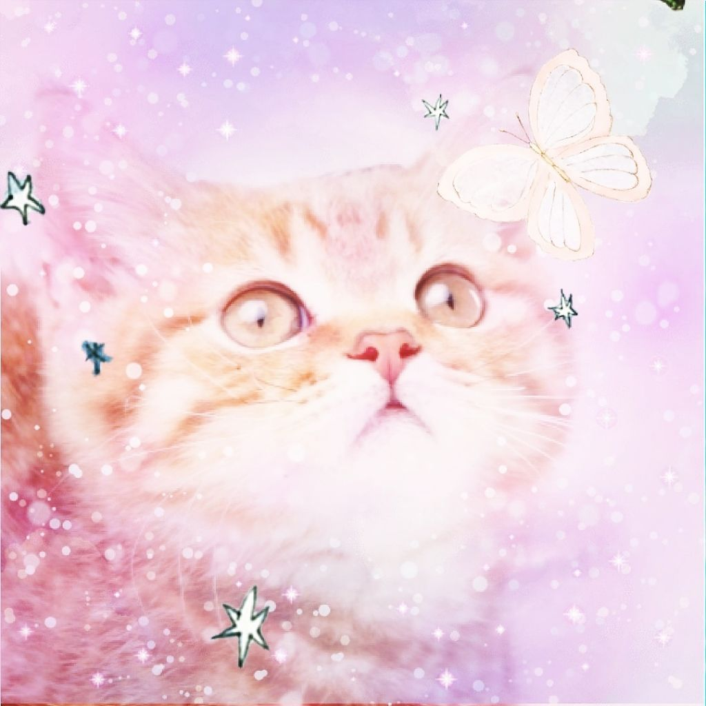 babycat0812