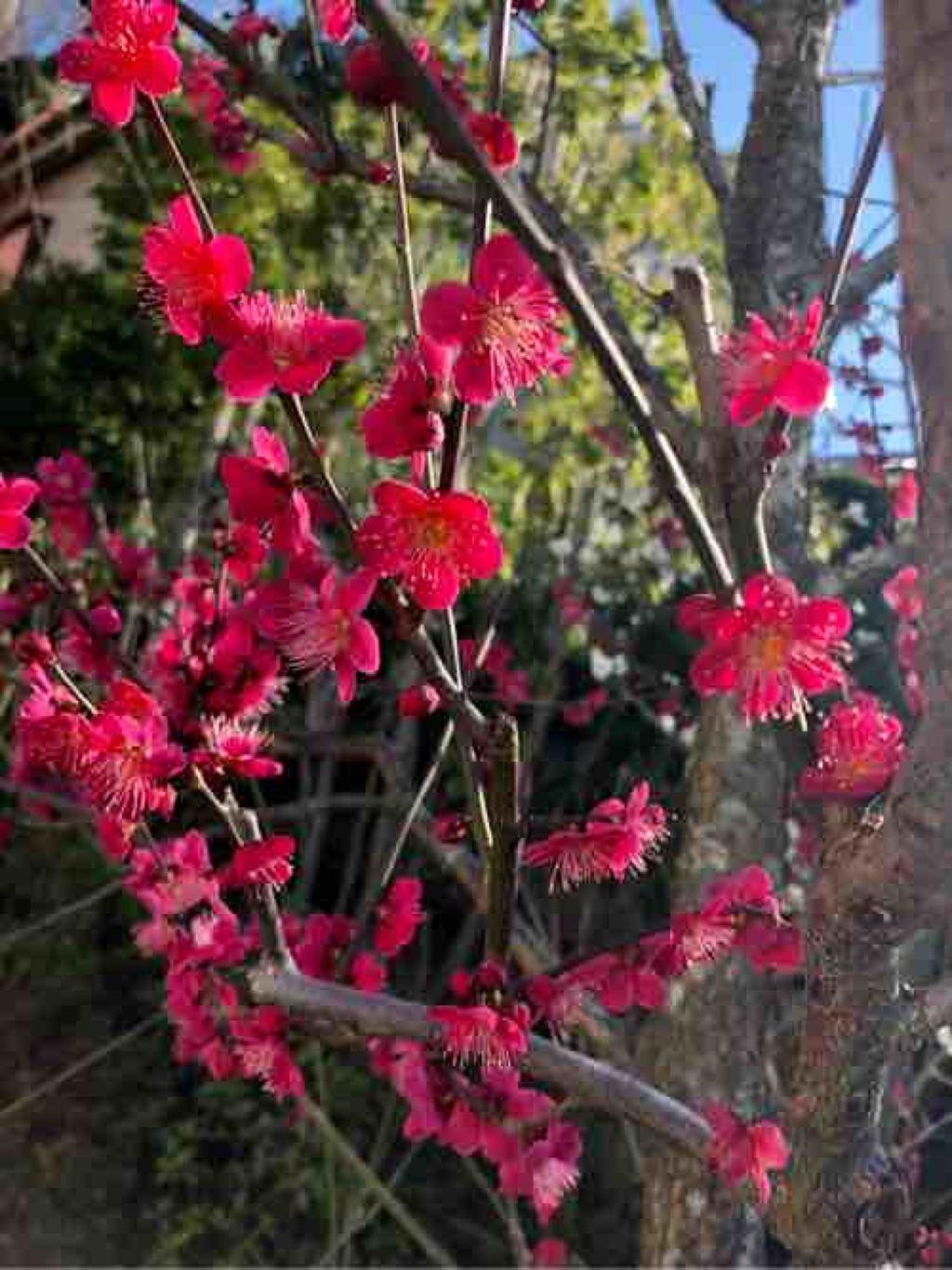 talvi_luumu_bloom89