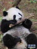 make_panda