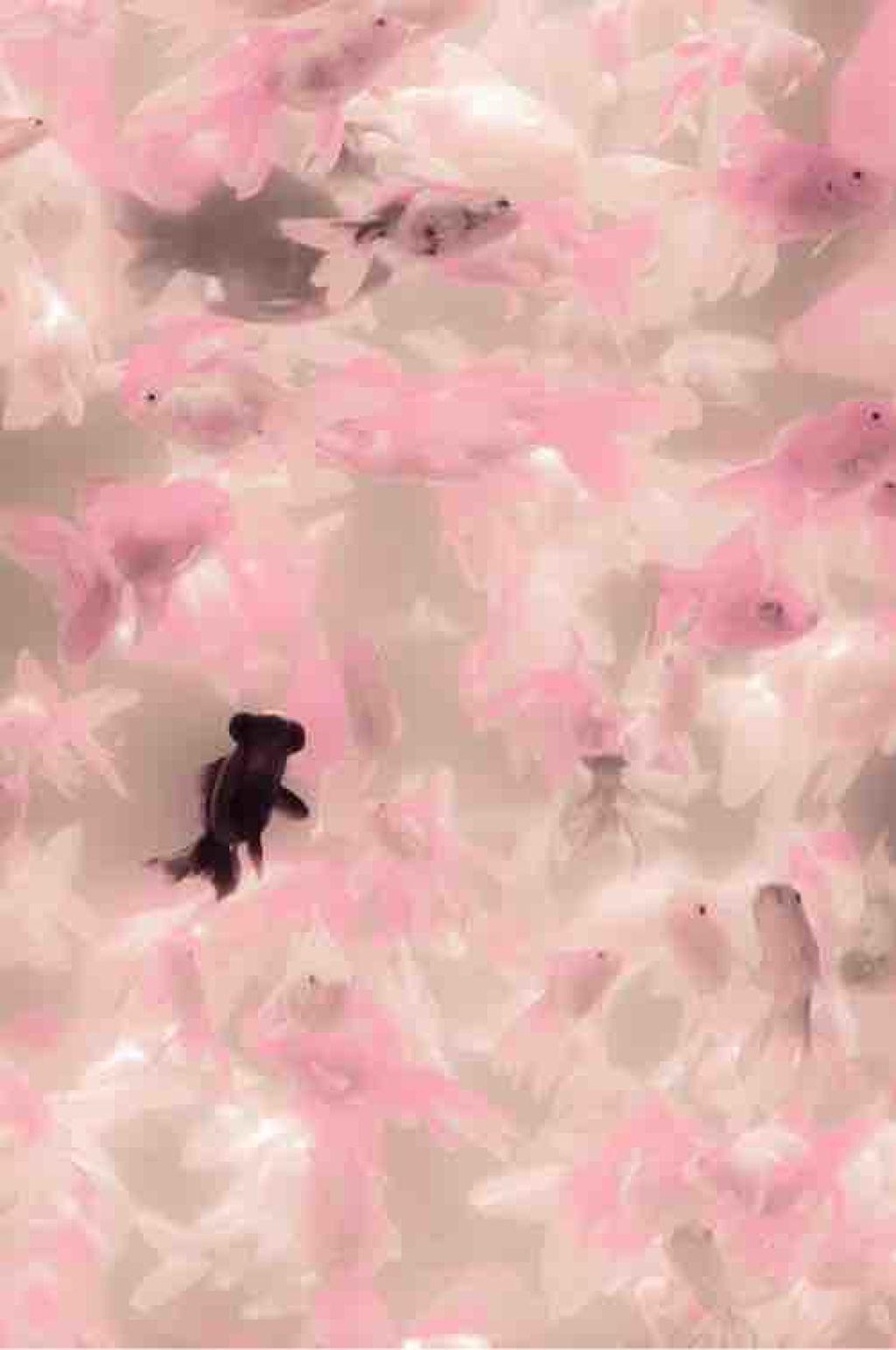 pink_beauty_bi7