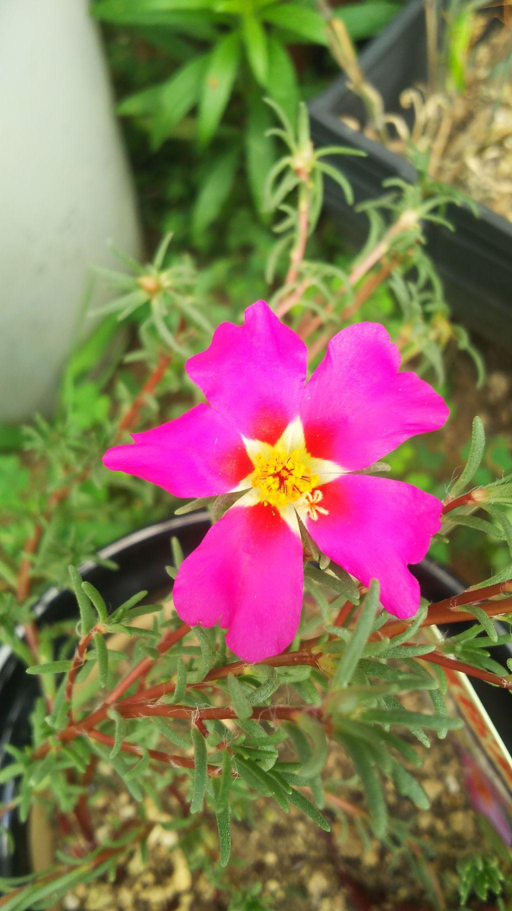 violet_beauty