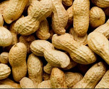 噂のピーナッツ