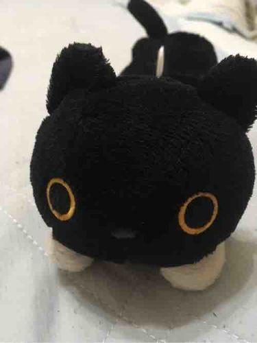 アントワネットの猫