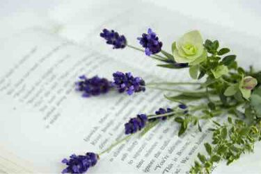happy aroma jasmine