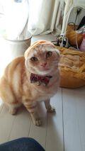 コスモ@うちの猫